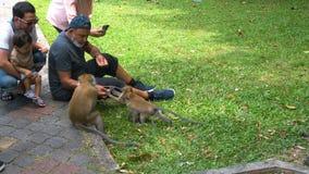 People Feeding Monkeys in Park, Malaysia - 22 August 2017 stock video footage