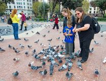 People feeding the pigeons in Catalonia Plaza, Barcelona Royalty Free Stock Photography
