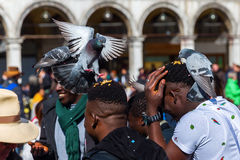 People feeding pigeons on the St. Marks Square in Venice Stock Image