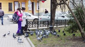 People feeding pigeons on the street stock video footage