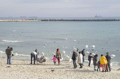 People feeding swans on the seashore Royalty Free Stock Photo