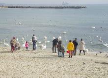 People feeding swans on the seashore stock photo