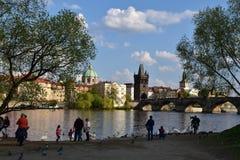 People feeding the swans on Vltava river bank. In Prague, Czech Republic, Europe Royalty Free Stock Photos