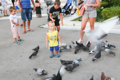 People feeds pigeons Royalty Free Stock Images