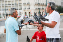 People feeds pigeons Stock Photos