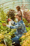 People fertilizing plants in greenhouse Stock Images