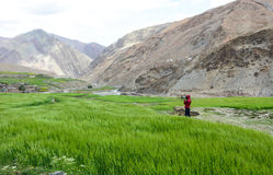 People on the field in Ladakh, India Royalty Free Stock Image