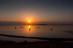 People floating at the Dead sea at dawn, Israel Stock Image