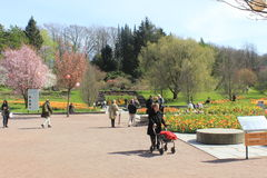 People, flowers, trees, spring, sunny day, Gothenburg botanical garden, Sweden Royalty Free Stock Images