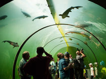 People in the freshwater aquarium tunnel look at the fish Royalty Free Stock Photography