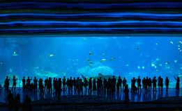 The people in front of the big fish tank stock image