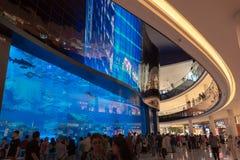 People in front Dubai aquarium in Dubai mall, UAE stock photos