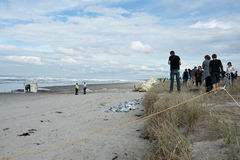 People gather on beach to view aftermath of Rena d Royalty Free Stock Image