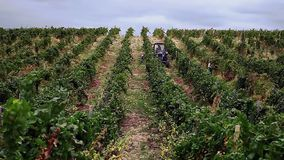 People gather grapes and tractor stock video footage