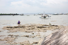 People gather plankton, crabs on the sea. Hard work in Cebu Philippines royalty free stock images