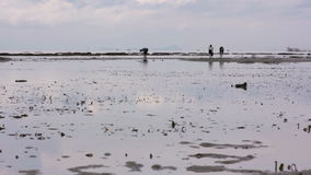 People gathering oyster during low tide Royalty Free Stock Images