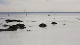 People gathering oyster during low tide Royalty Free Stock Photos