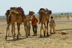 People getting camels ready for a safari ride in the desert near Jodhpur, India. Jodhpur, India - April 04, 2007: Unidentified people getting camels ready for a royalty free stock photography