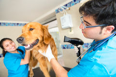 Grooming a dog at the vet Stock Image