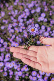 People hand with flower. People hand with blue flower on blue flowers background Royalty Free Stock Images