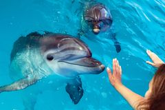 People hand touch a dolphin. Marine life royalty free stock images