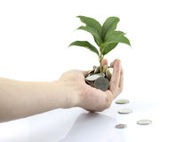 People hand and tree growing from coins Royalty Free Stock Photography