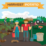 People harvesting potato in a field in the village. Manual labor, tractor with trailer, shovel, bucket, sack, bush potatoes, rural view. Cartoon flat Royalty Free Stock Images