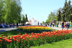 People have a rest in city park with tulips Royalty Free Stock Image