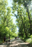 People have a rest in park with trees and poplar down. 29 June 2015 Chernihiv Ukraine: people having a rest in the city park with big trees poplar down royalty free stock photos