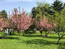 People Having Fun In The Japanese Garden Of Herastrau Public Park Stock Photos