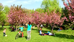 People Having Fun In The Japanese Garden Of Herastrau Public Park On Weekend Spring Day stock footage