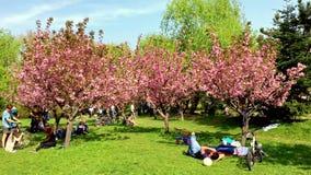 People Having Fun In The Japanese Garden Of Herastrau Public Park On Weekend Spring Day stock video footage