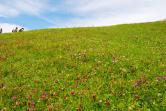 People hiking on mount Rigi, green grass and wild flowers Stock Image