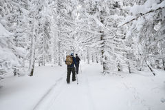 People hiking in mountain winter forest covered by snow.  Royalty Free Stock Photography