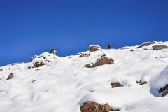 People hiking in snow trail up to mountains. Kyrgyzstan rocks stock photo