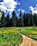 People Hiking on Trail leading Towards Woods. People hiking on a trail that is leading towards the forested woods in Vail, Colorado, USA during the summer stock photos