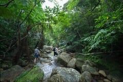 People hiking in tropical rainforest jungle, Ishigaki Island, Okinawa, Japan. A couple hiking along a jungle stream with tree fern canopy in tropical rainforest Stock Image