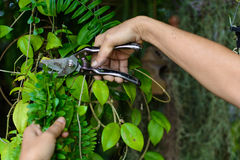 People Hold knives Cut branches in garden Stock Photo