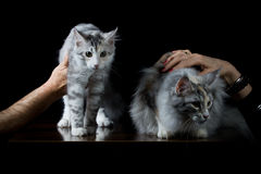 People holding two cats with hand. On black background stock photos