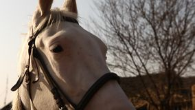 People with Horse at Rural area stock footage