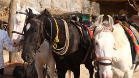 People with Horse at Rural area stock video footage