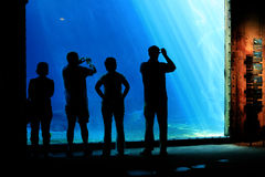 People In The Aquarium Royalty Free Stock Images