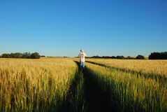 People In The Wheat Royalty Free Stock Image