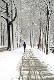 People jogging in winter in the forest Royalty Free Stock Image