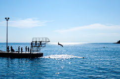 People jumping in the water from pier Royalty Free Stock Photo