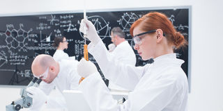 People laboratory studies Royalty Free Stock Photography