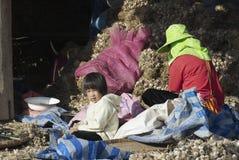 People of Lisu ethnic group sort garlic in Chiang Mai, Thailand. Royalty Free Stock Photos