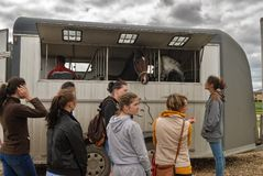 People load horses into van for transportation Stock Image