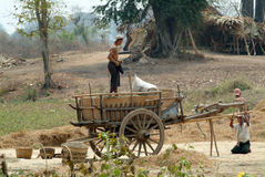 People loading up carts crops. Stock Images