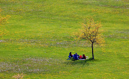 People and lonely tree. Landscape - People and lonely tree on the field with small flowers Stock Photography